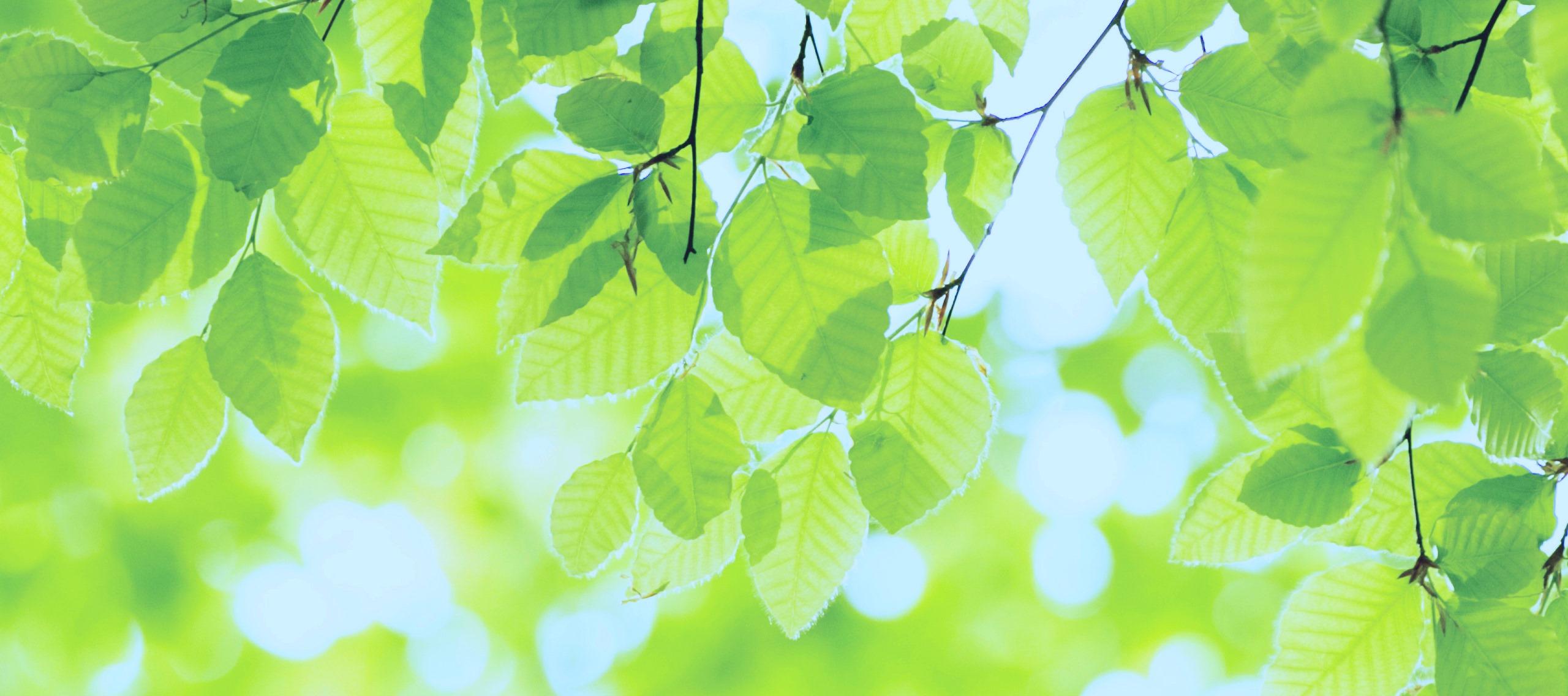 top-green